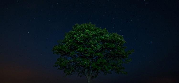 The lonley tree – Der einsame Baum