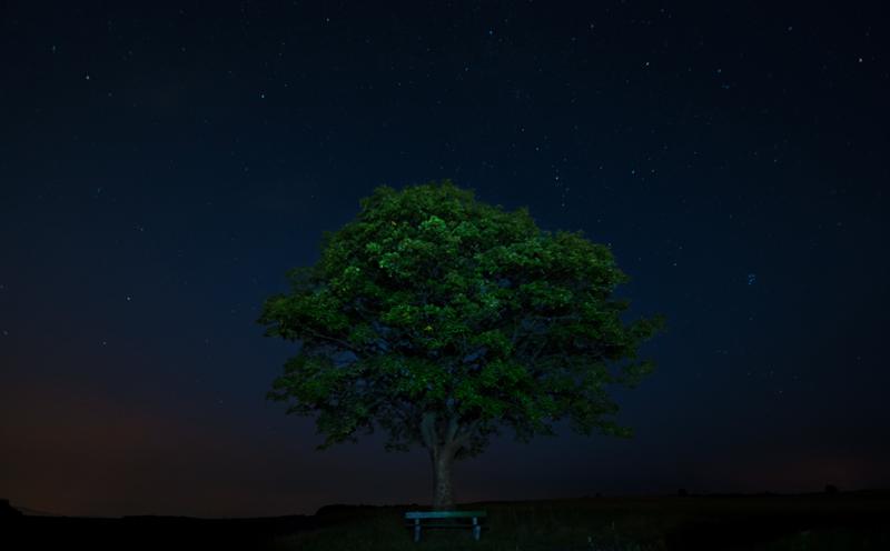 The lonley tree - Der einsame Baum
